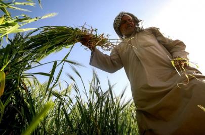 4000 فلاح في ديالى يعود لعمله الزراعي بعد منع الاستيراد